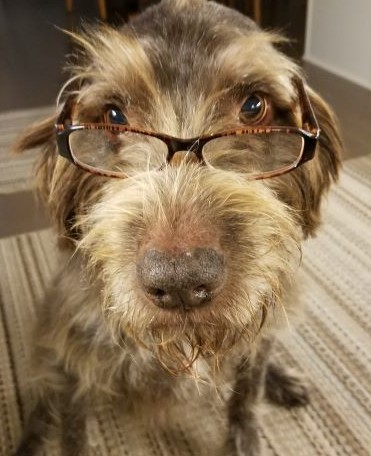 dog picture of penny with glasses